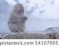 일본 원숭이지고 쿠 다니 온천 54107605