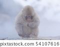 일본 원숭이지고 쿠 다니 온천 54107616