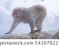 일본 원숭이지고 쿠 다니 온천 54107622