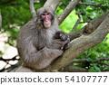 나무에 원숭이 54107777