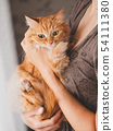 Cute ginger cat is sitting on woman's hands 54111380