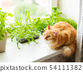 Cute ginger cat is sitting on window sill  54111382