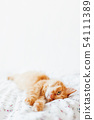 Cute ginger cat lying in bed.Fluffy pet,copy space 54111389
