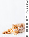 Cute ginger cat  lies near a pile of beige clothes 54111393
