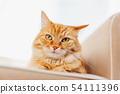 Cute ginger cat lying on couch. Fluffy pet  54111396