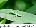 Young body of mantis 54114570