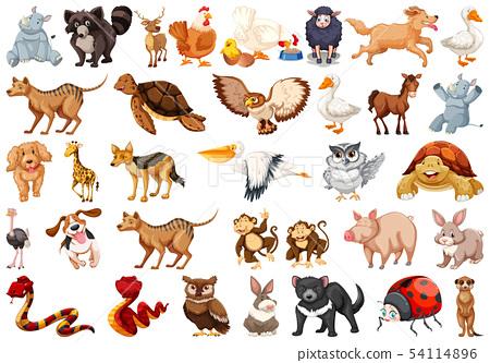 Set of animal character 54114896