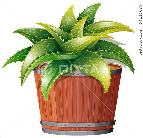 An aloe vera plant in pot 54115085