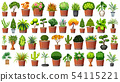 Set of plant in pot 54115221