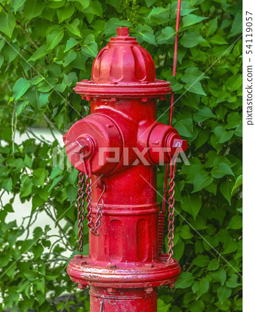 Red fire hydrant against vivid green leaves 54119057