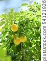 Plum seeds 54121926