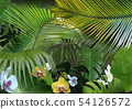 Tropical Background with Photorealistic Vegetation 54126572