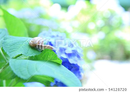 繡球花和蝸牛 54128720