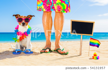 gay pride dog and owner on   summer holidays 54131957