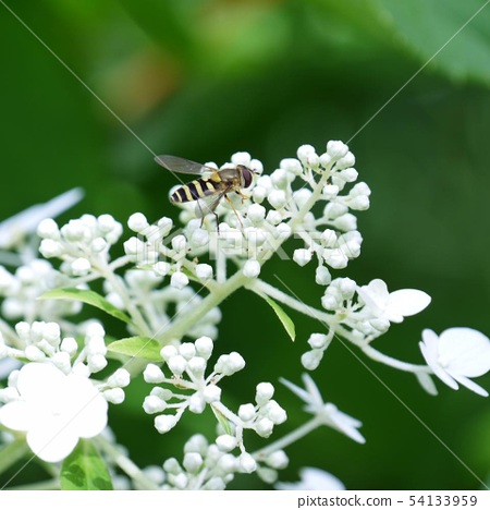 Bee 54133959