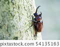 Beetle on the tree in the forest. 54135163