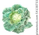 圓白菜領域水彩水下落 54138733