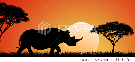 Wild African rhino at sunset 54140550