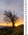 Old tree and the setting sun in the mountain 54141655