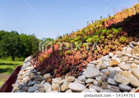 Clorful green living extensive sod roof detail 54144761