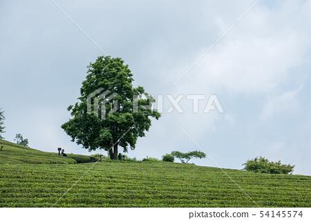 나무와 하늘 54145574