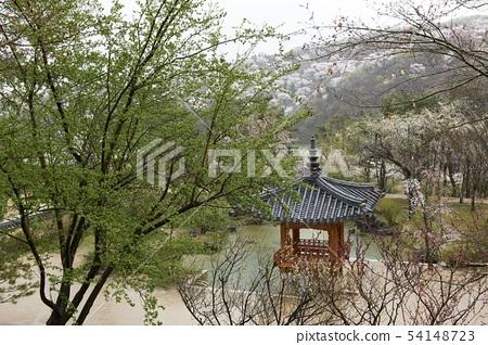 호암미술관,용인시,경기도 54148723