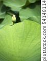 Lotus 54149114
