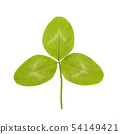 Green leaf of Clover or trefoil are common names for plants of the genus Trifolium, tres three and 54149421