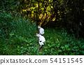 5 월의 숲에 사는 야생 고양이 54151545