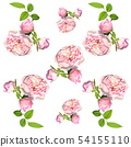 Pink rose seamless pattern isolated. 54155110