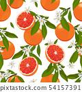 橙色 橘子 橙子 54157391