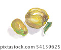 모과 열매 54159625