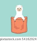 Llama alpaca face head inside the pocket 54162024