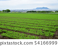 Taking a picture of the early summer scenery of a carrot field in the field farming area of Kochi-cho, Hakodate, Hokkaido 54166999