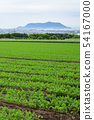 Taking a picture of the early summer scenery of a carrot field in the field farming area of Kochi-cho, Hakodate, Hokkaido 54167000