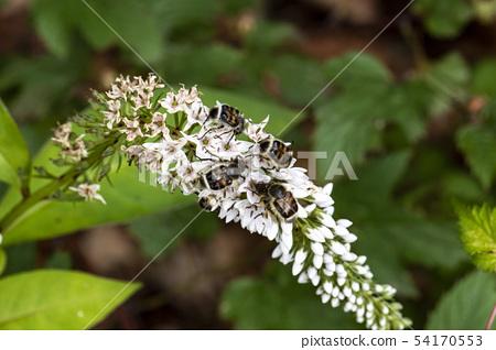 곤충 나비 잠자리  54170553