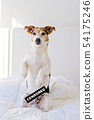 Cute jack russell dog in bedroom with censored label 54175246
