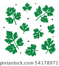 Parsley. Green parsley leaves. Vector illustration of a plant 54178971