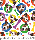 Colorful and playful Jack Russell Terrier 54179120