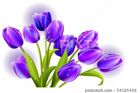 Purple tulip on the white background 54185438