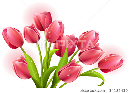 red tulips on the white background 54185439