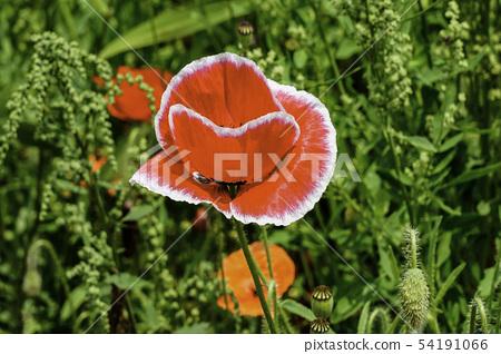 꽃 54191066