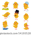 Set of images of little chickens. Vector illustration on white background. 54193528