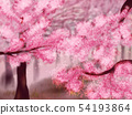 Blooming Sakura Trees 54193864