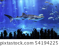 Whale shark swimming gracefully 54194225
