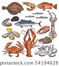 Illustrations of sea food products for gourmet menu. Vector pictures of squid, oyster and different 54194626