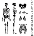Vector silhouette of human skeleton. Anatomy pictures. Different bones 54194767