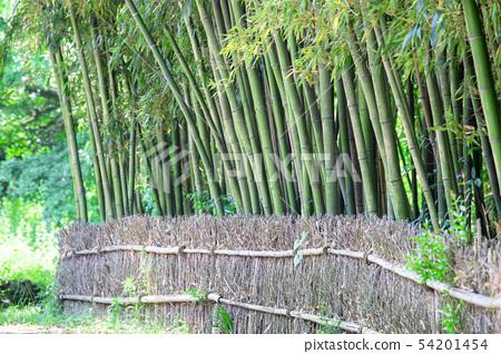 나무울타리와 대나무 54201454