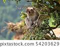 나무 위의 원숭이 54203629