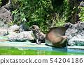 캘리포니아 바다 사자의 부모와 자식 54204186